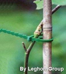 brida reutilizable para plantas y cables rattenstaart